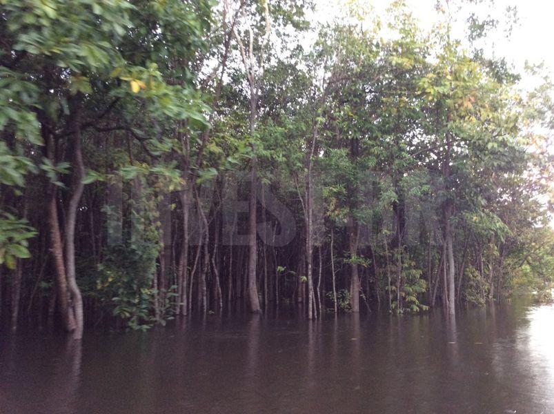 Área em Careiro, Amazonas - AM53001 - 4