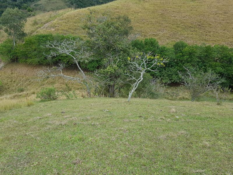 Sítio com 40,000.00 m² com lago, pasto e área para plantação. - stary - 27