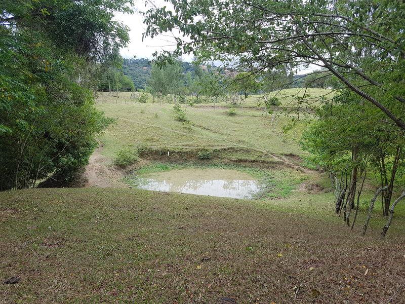 Sítio com 40,000.00 m² com lago, pasto e área para plantação. - stary - 31