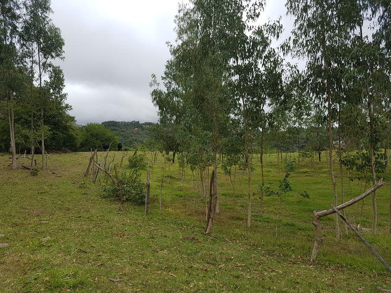 Sítio com 40,000.00 m² com lago, pasto e área para plantação. - stary - 33