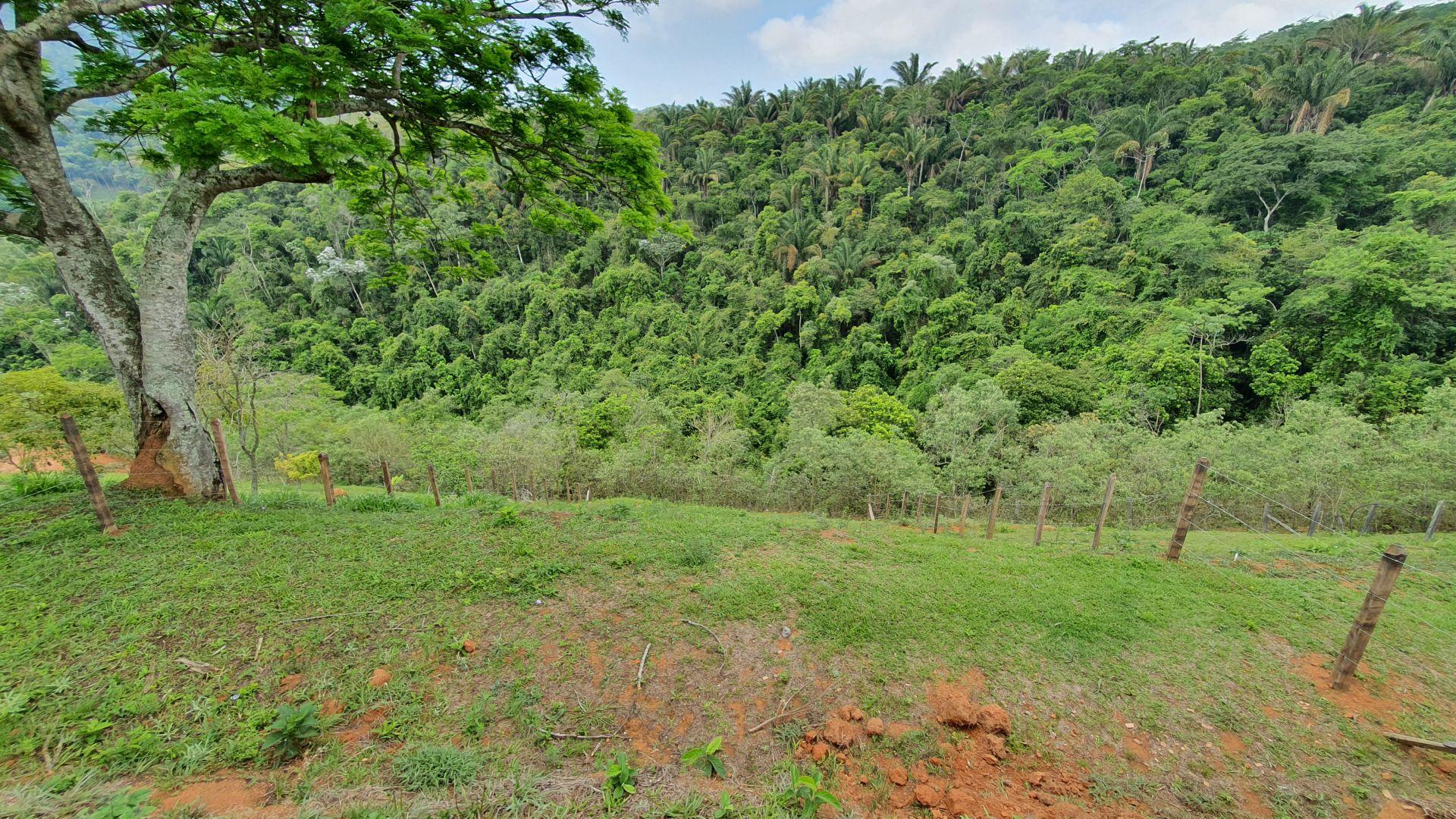 Terreno 442m² à venda Morro Azul, Engenheiro Paulo de Frontin - R$ 45.000 - trmr45 - 3